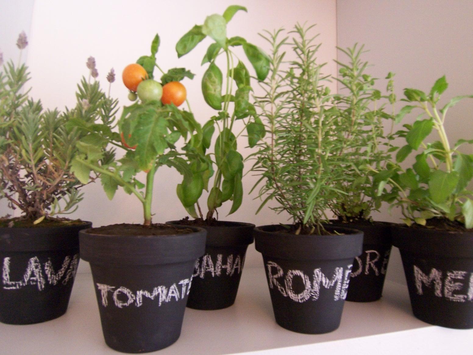 Huerta en casa cultiv palta cherries y albahaca s o s - Huerto en casa macetas ...